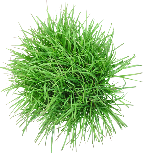 grass decorative